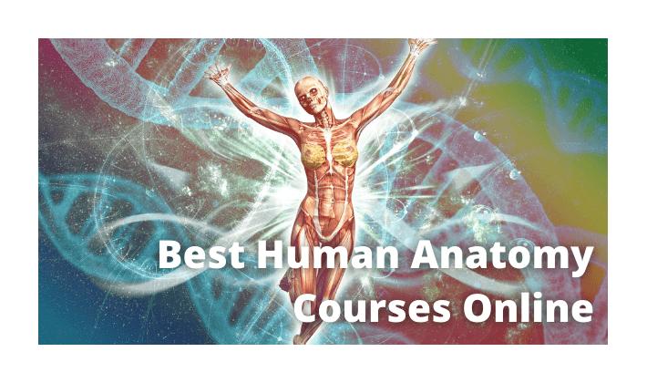 Best Human Anatomy Courses Online